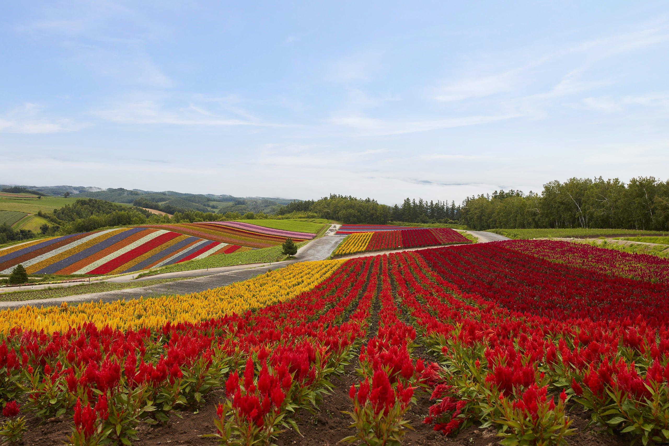 Tomamu Hokkaido Lato